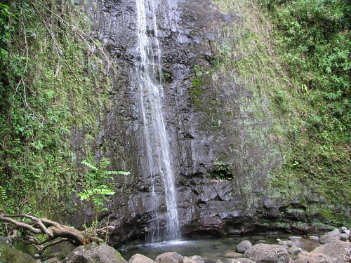 Manoa Falls | by Frank Hamm