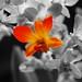 Orchide 5