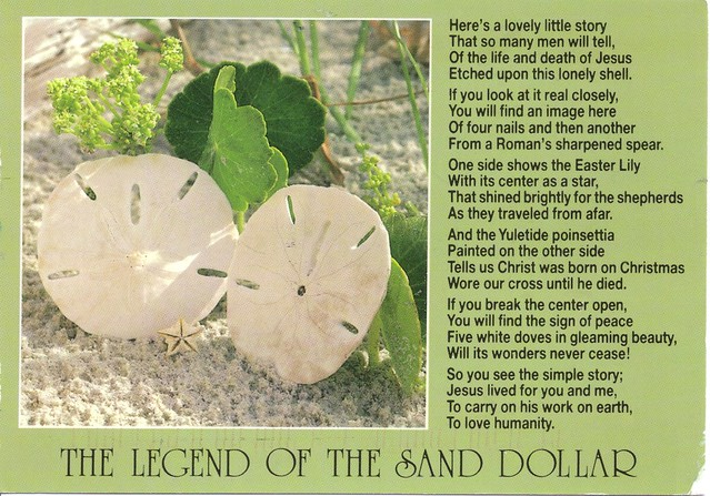 Legend of the Sand Dollar Postcard | Mailbox Happiness-Angee at ...
