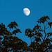 moon-color-3036.jpg