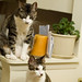 02.03.2009: twinsies