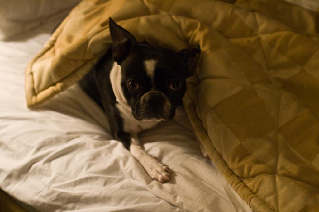 Pet Friendly Motel Dubbo