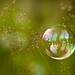 Landscape in a bubble