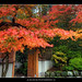Fall Colors at Portland Japanese Garden