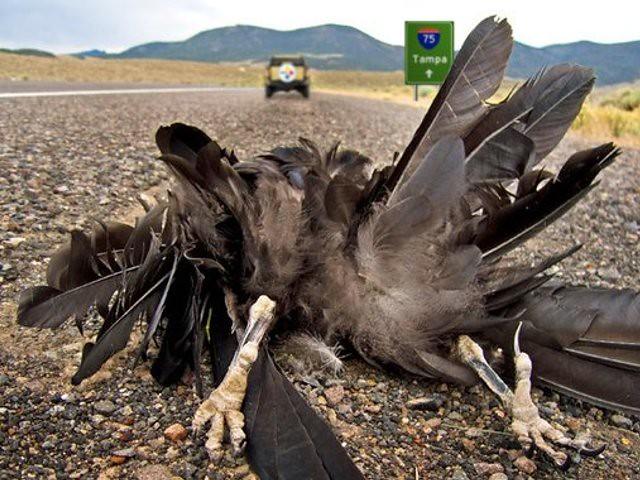 Image result for dead raven