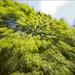 Zoom trees sky