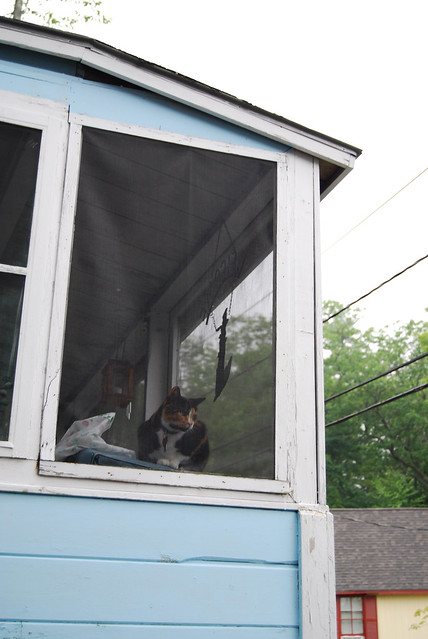 Cat Window Screened In Box