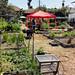 Raymond Ave Community Garden