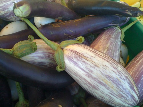 Various Eggplant | by swampkitty