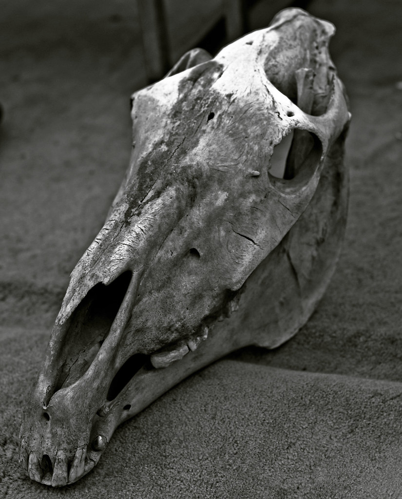 Image result for horse skull