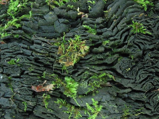 carbon 14 dating photos