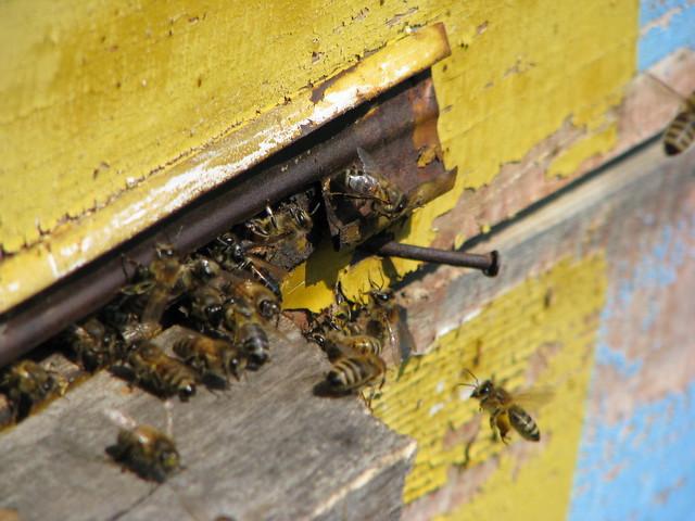 Бджолина смерть