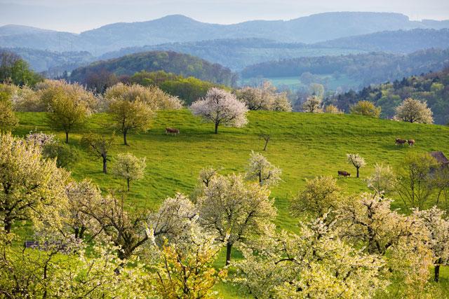 dieti natura basel suisse
