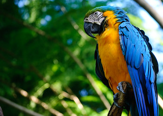 Parrot (Blue and Yellow Macaw) | by BookGuy: