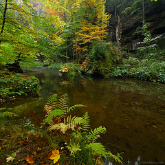 Saxony Magic Wood II | by Dietrich Bojko Photographie