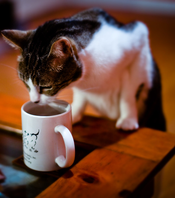 Advantage Dogs Cats Dosage Per Pound