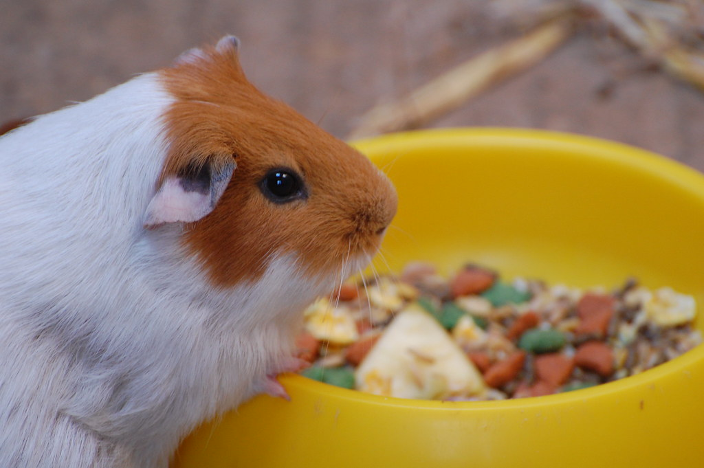 Can Hamsters Eat Peanut Butter Dog Biscuits