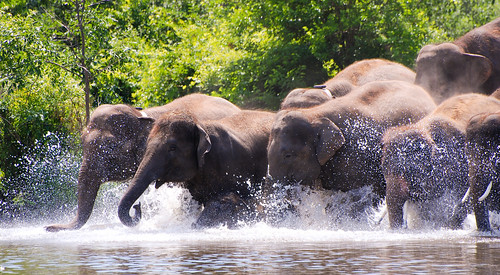 Elephant Swim | by Keith Watson Photography