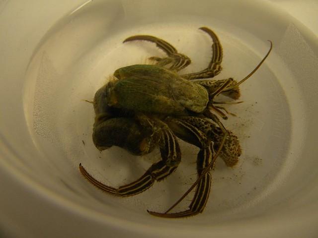 hermit crabs a-z pdf
