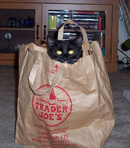 Cocoa in a Trader Joe's bag | by power_piglet