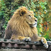 King of the Jungle تصور محمد السويح