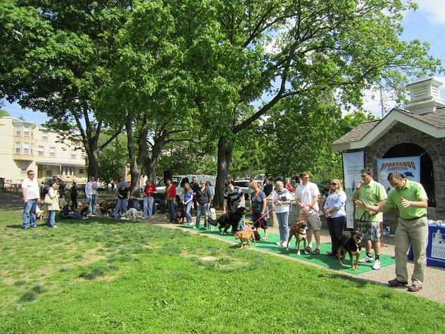 Roxborough Dog Park Site Patch Com