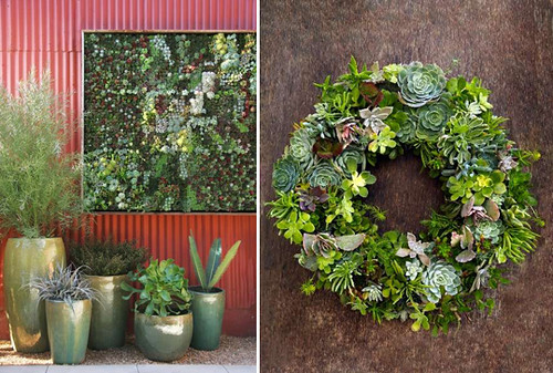 flora grubb succulent wall wreath find out more on my