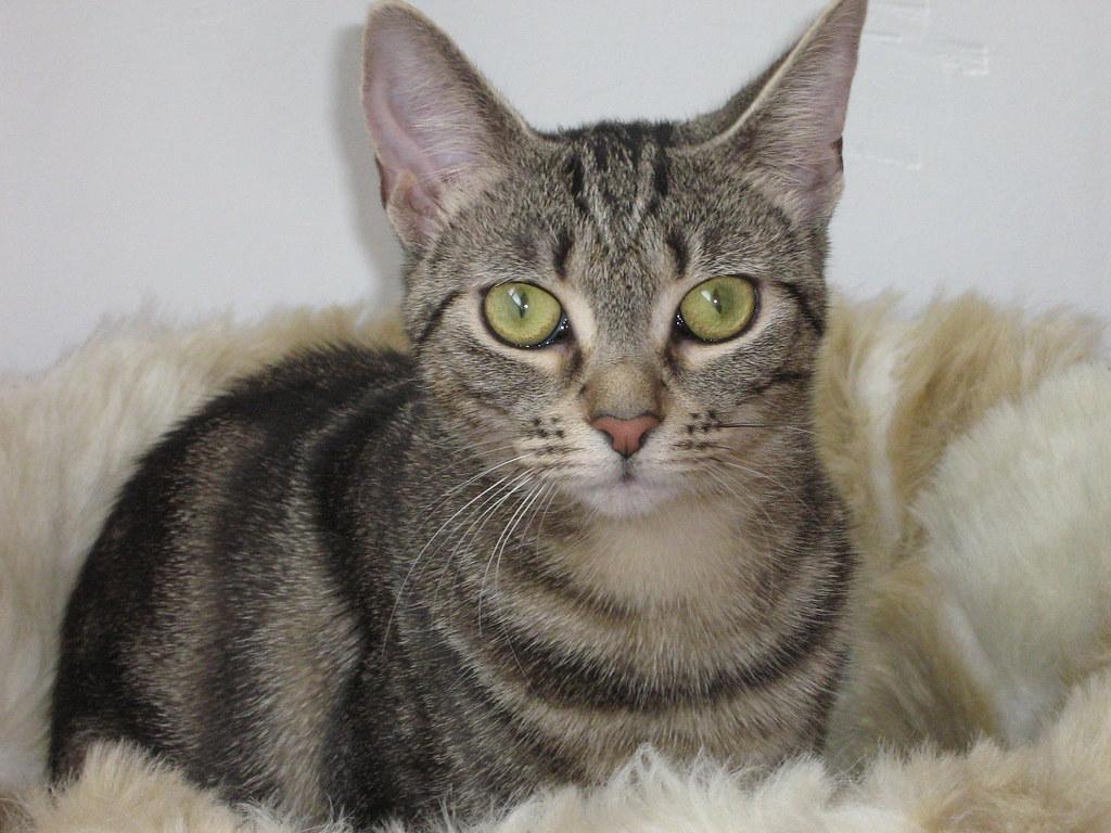 Conjunctivitus Cats Eyes