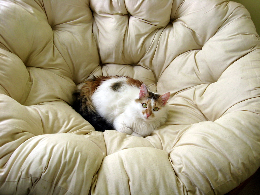 Perfect Desdemona In The Papasan Chair Crafting With Cat Hair
