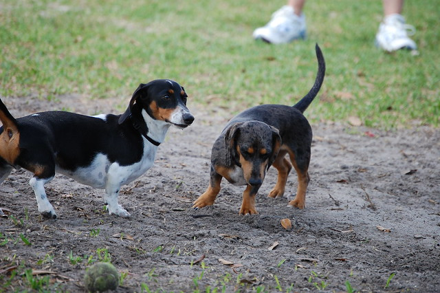 Best Soft Dog Food For Older Dogs