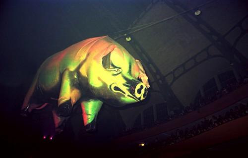 1977 - Pink Floyd - The Pig-Sau is underway-2