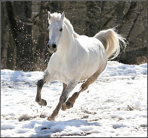 Image result for white stallion