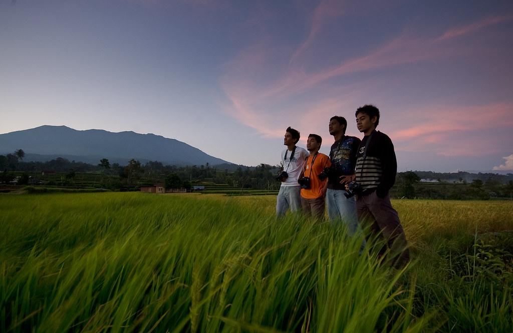 Sawah padi di Pariangan   Pemandangan dari sawah padi ...