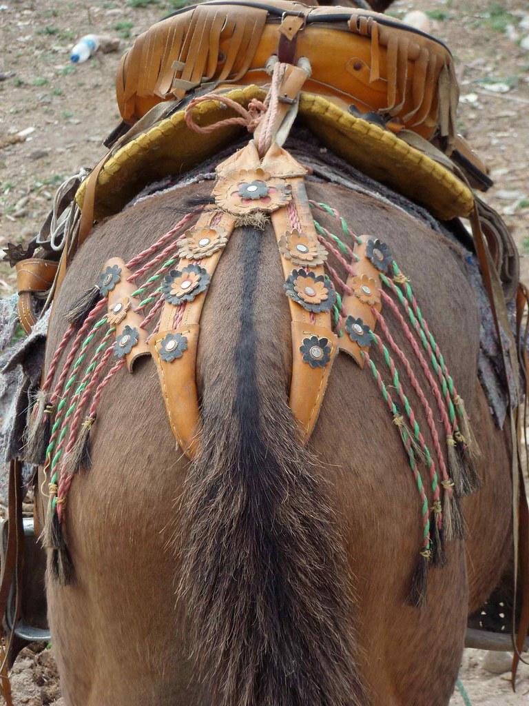 Caballo con silla de montar adornada horse with fancy sa for Sillas para caballos
