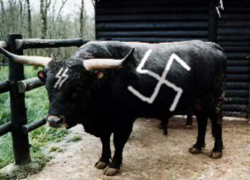nazi cow nazi cows are on the loose in britain oh yes