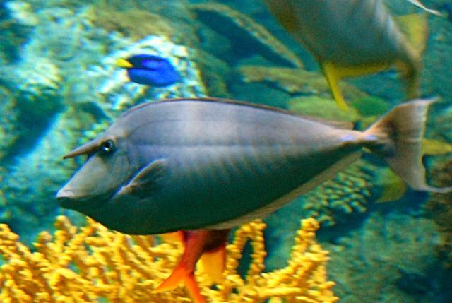 Dork fish flickr photo sharing for Bill engvall dork fish