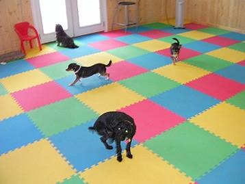 Interlocking Rubber Floor tiles doggydaycareflooring3