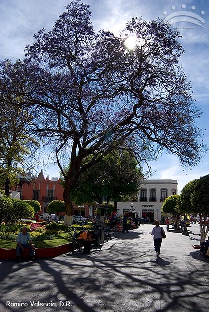 Santiago de quer taro jardin zenea a contraluz santiago for Jardin zenea queretaro