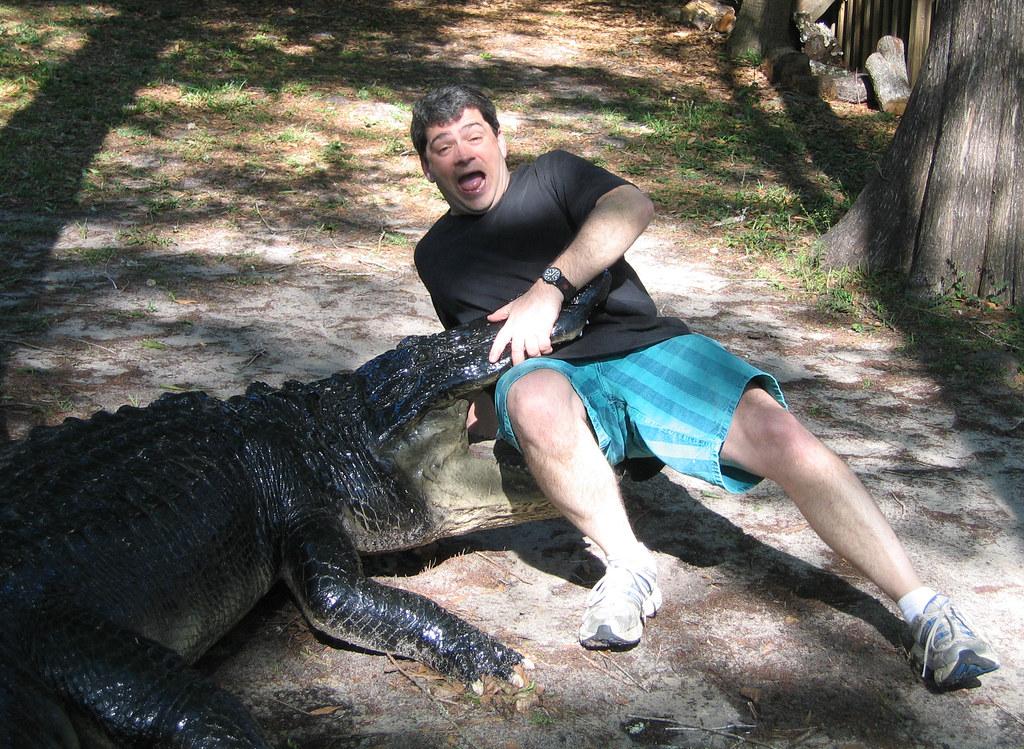 American Alligator Attacks Alligator Attack Flickr