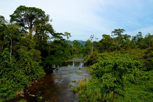 Cameroon Rainforest | Rainforest blankets the land in ...