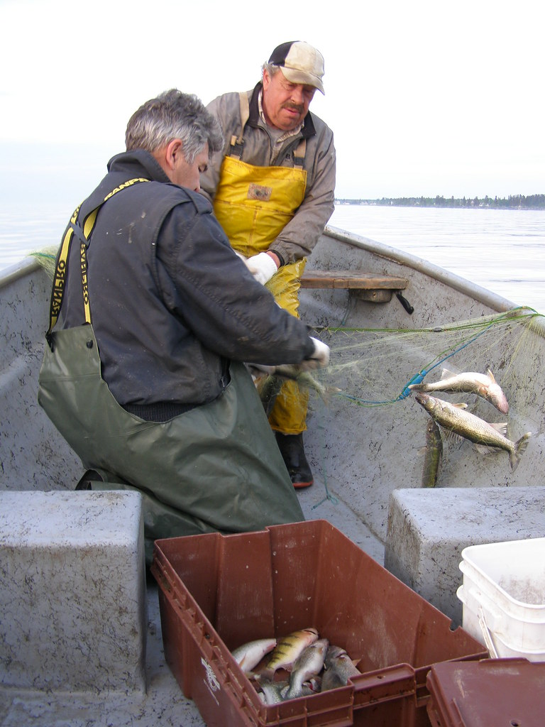 Hecla island lake winnipeg mb fishing on lake for Lake winnipeg fishing report