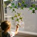 decorating the window with frogs
