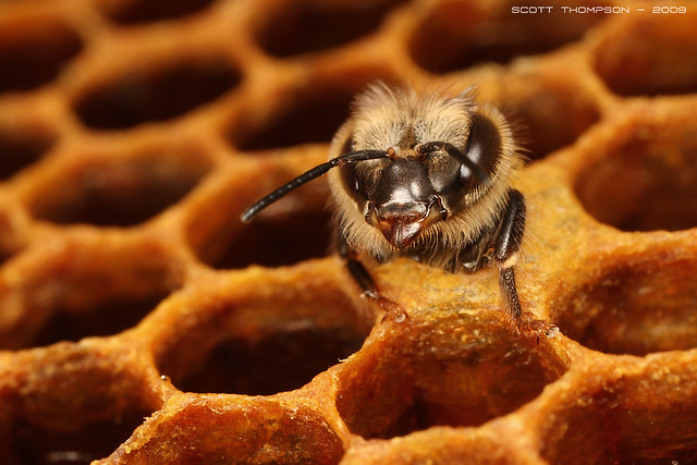 """""""A bee is born"""" A worker bee hatching 