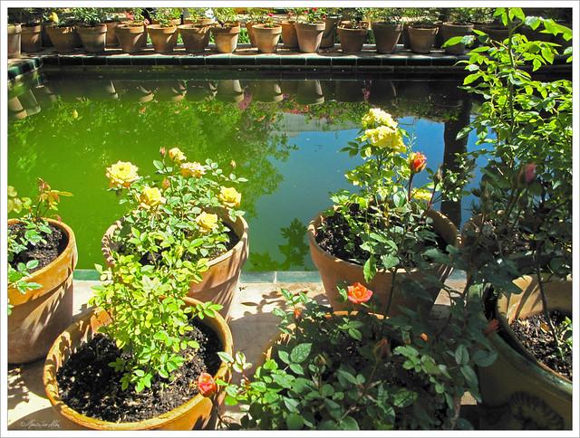 Macetas de rosas sobre el estanque jard n chico casa de for Jardin chico casa