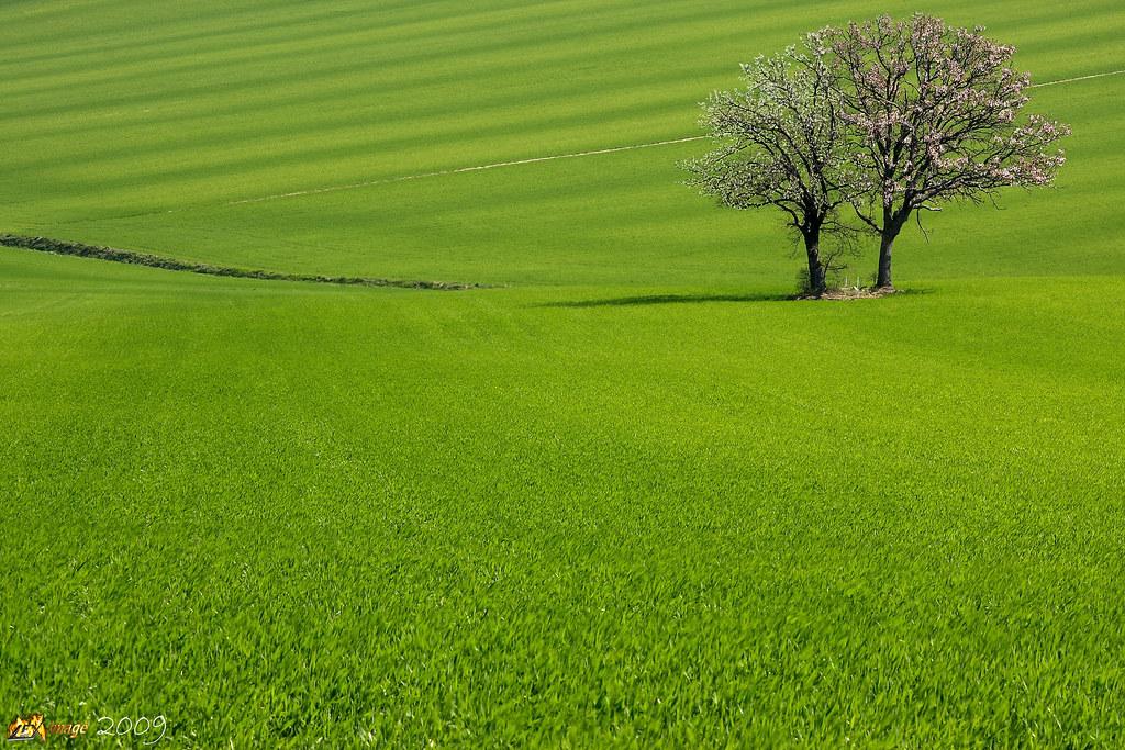 Verdi praterie verde primavera grano colore colori campagn ...