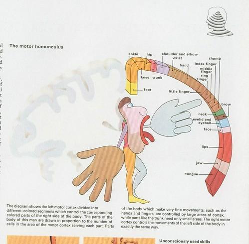 how to make a hommunculas