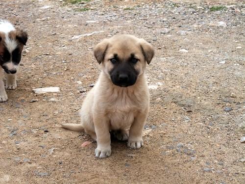 3321643829 8523cdc373 - En sevdiğiniz köpek cinsi nedir?