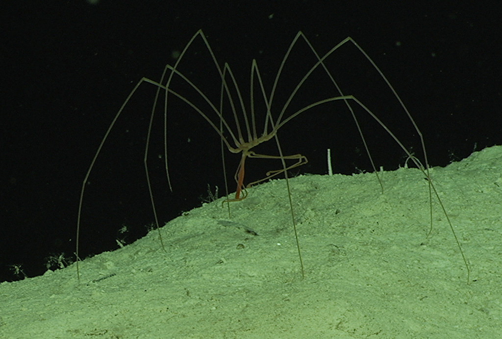 Image Result For Www Deep Sea