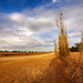 Drought - Australian landscape