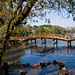 Senzoku-ike 洗足池
